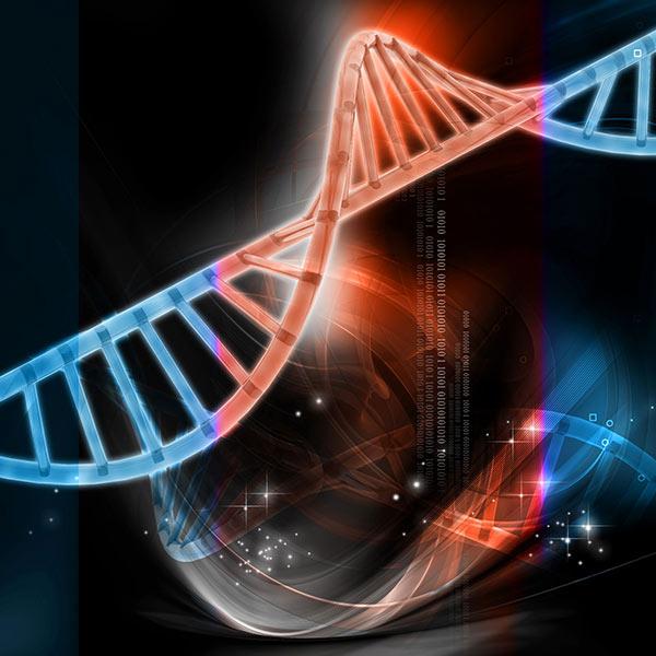 DNA Strand with HHV-6 Chromosomal Integration